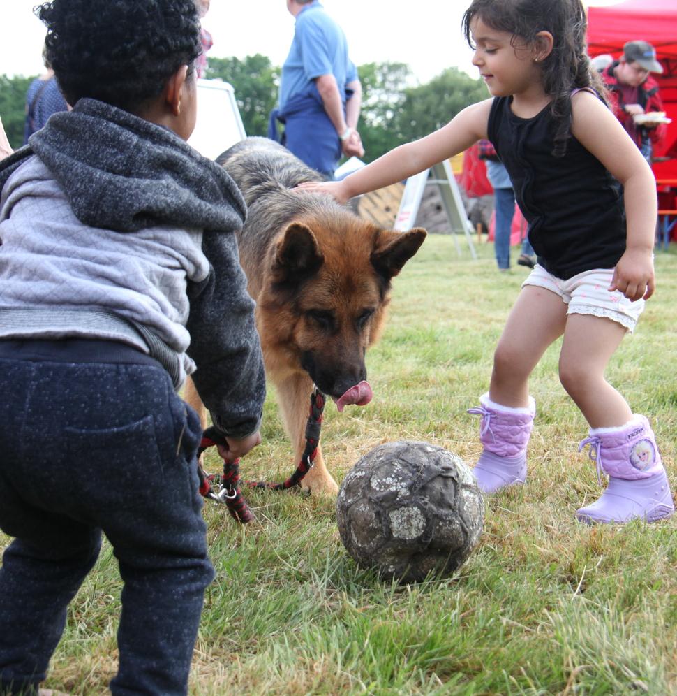 Hund Fussball IMG_5290